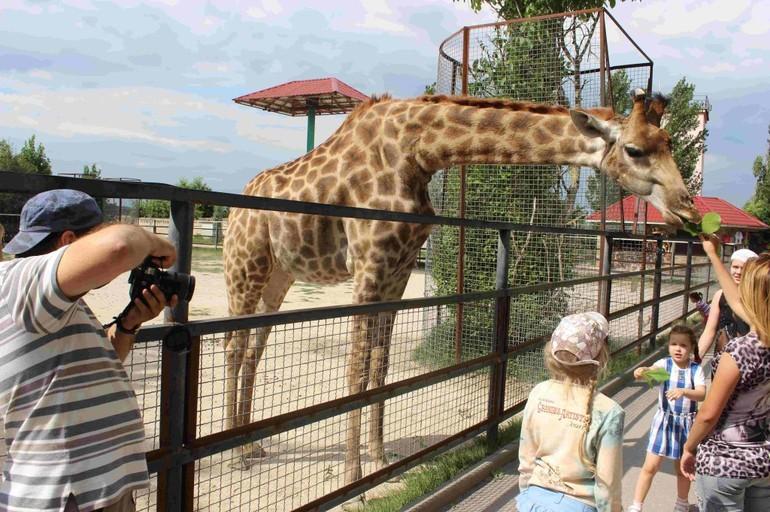 Доступные экскурсии и дополнительные услуги знаменитого крымского зоопарка