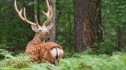 Приокско-Террасный биосферный заповедник — чем знаменит