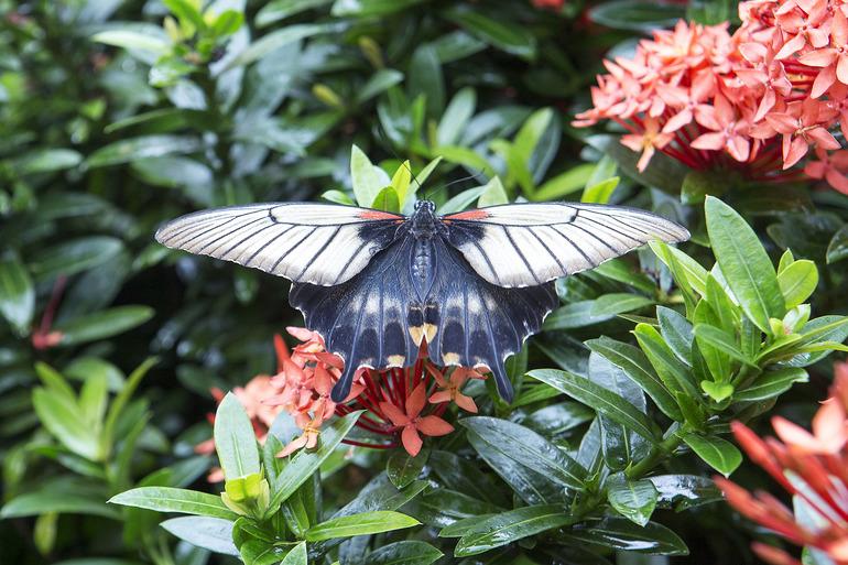 Консерватория бабочек