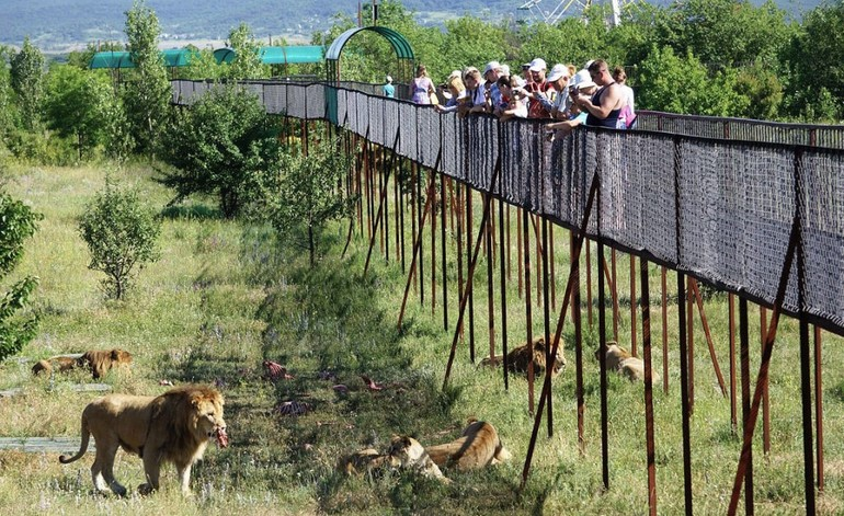 Общая информация о сафари-парке «Тайган»