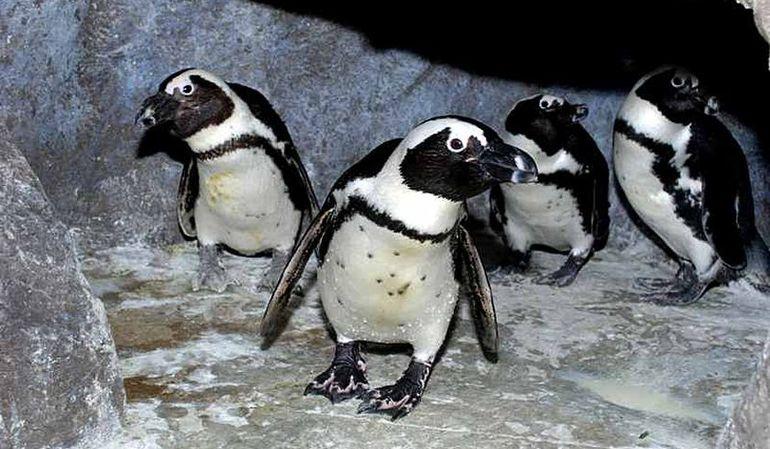 Пингвинарий в лазаревском