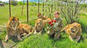 Сафари-парк «Тайган» — расписание, отзывы и цены