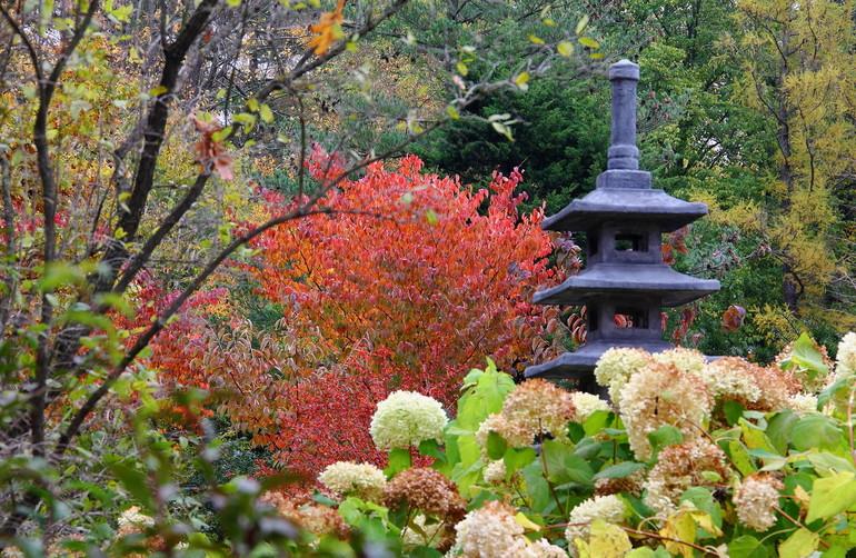 японский парк в москве