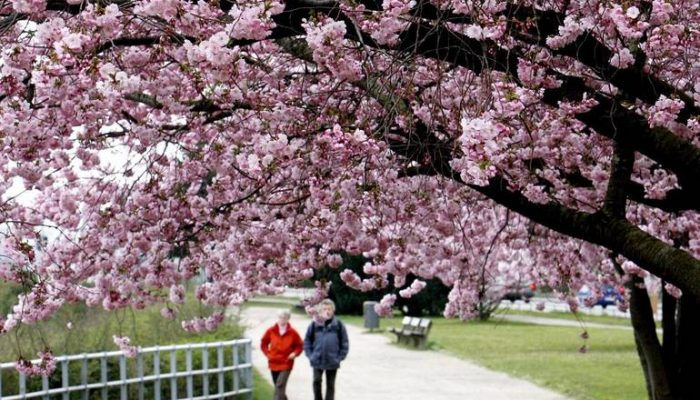 Японский сад в Ботаническом саду — достопримечательности парка и режим работы