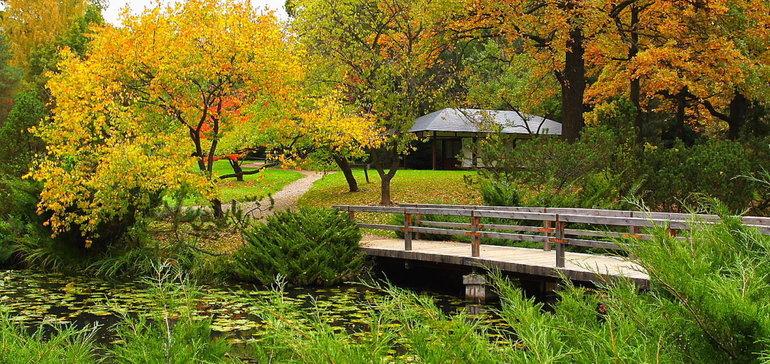 Японский сад в ботаническом саду как добраться